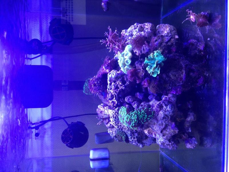 Aka's Reef Cube ! 377710IMG2018