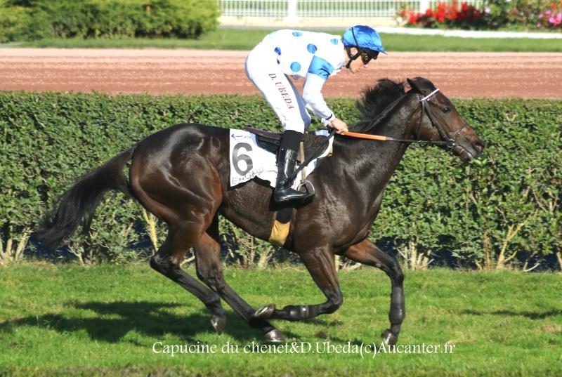 Photos Enghien 22-10-2016 Grand Steeple 3813415J6A9357