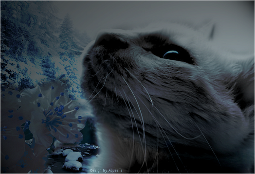 The Aquaelïs Queen © Workshop 382033whitecatinbl8ackandwhite2bybobbyfufud57rf5i