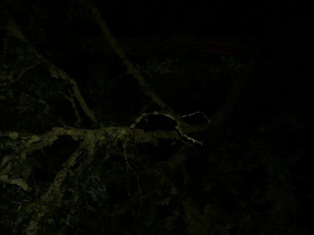 Orages monstres sur le Bordelais dans la nuit du 25 au 26/07 et du 26 au 27/07 385850P1200611