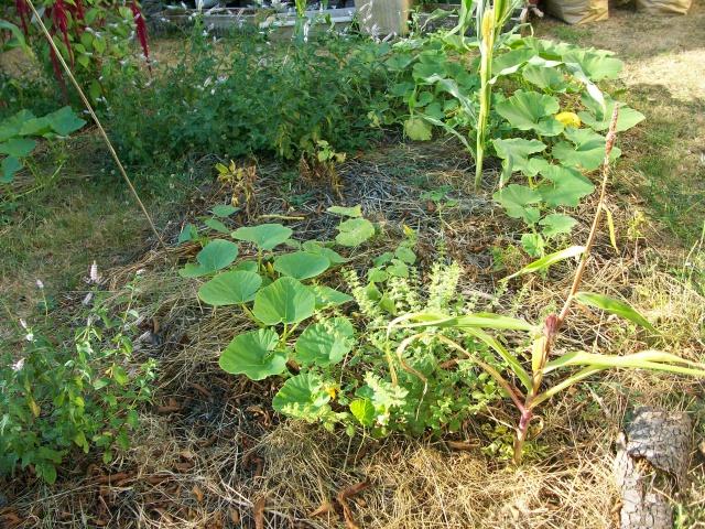 Apprentissage agraire, famille Valtin 3874361001896
