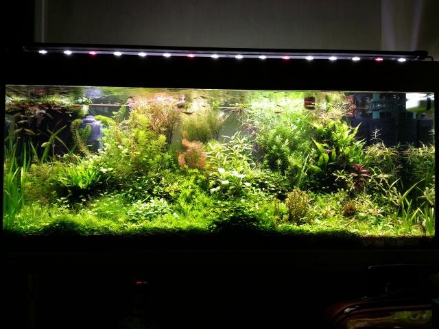 Mes (plus) de 60 plantes dans mon 240 litres - Page 2 39340220140120195116