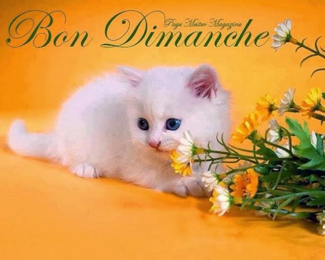 Bon Dimanche 395664dimanchechat