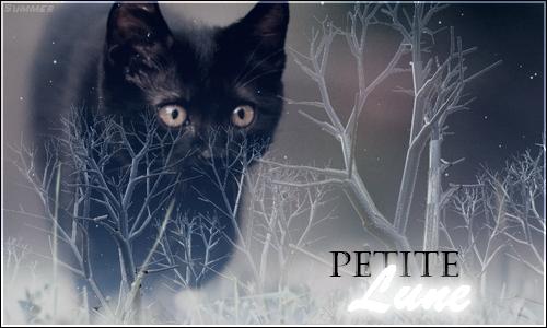 Petite Lune ~ Chatonne des Lueurs 395998PetiteLune