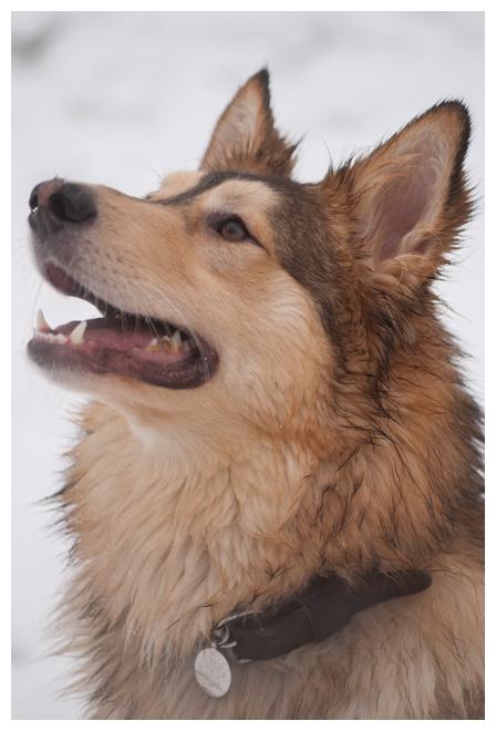 Nos loups grandissent, postez nous vos photos - Page 9 396601DSC5057640x480