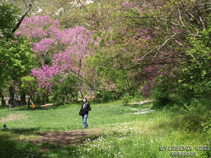 """La Vallée de St Pons """" La Vallée Rose """" à Gemenos Bouches du Rhône ♥♥♥ 40055912"""