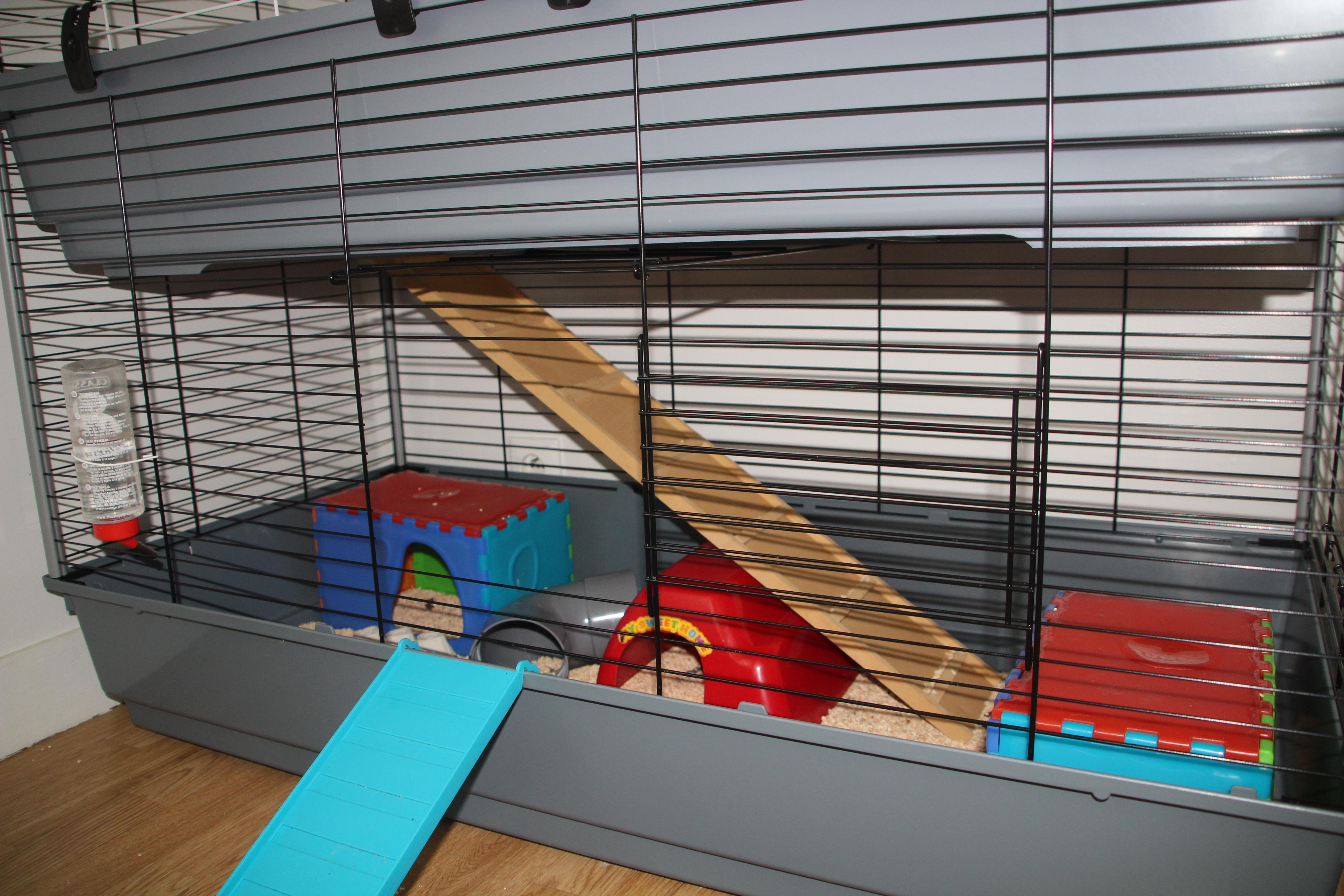Cage à lapin pour mes rats 402963IMG1613