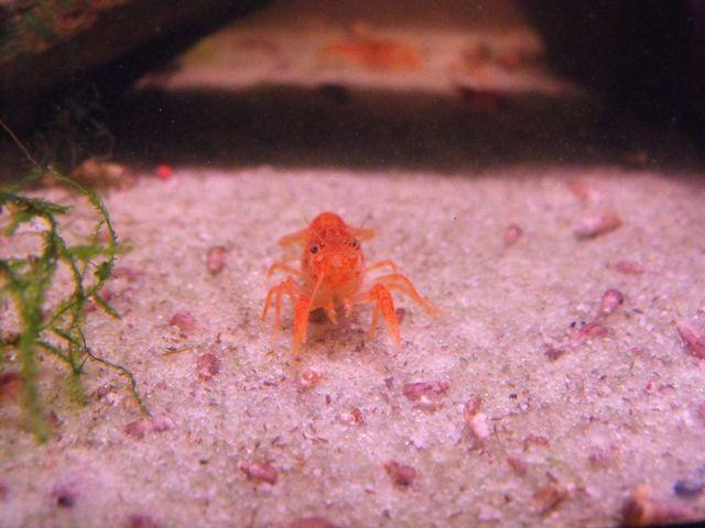 Avez vous des crevettes ou d'autres crustacés? 404623CPO1080111