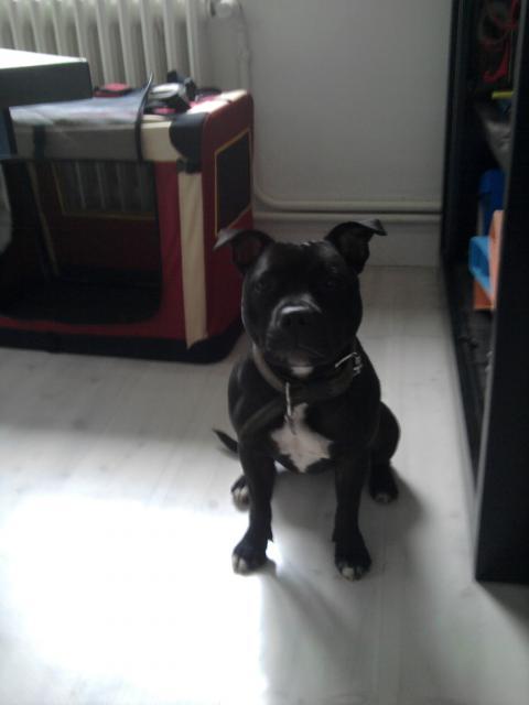 Son chien au travail 405850Photo0128