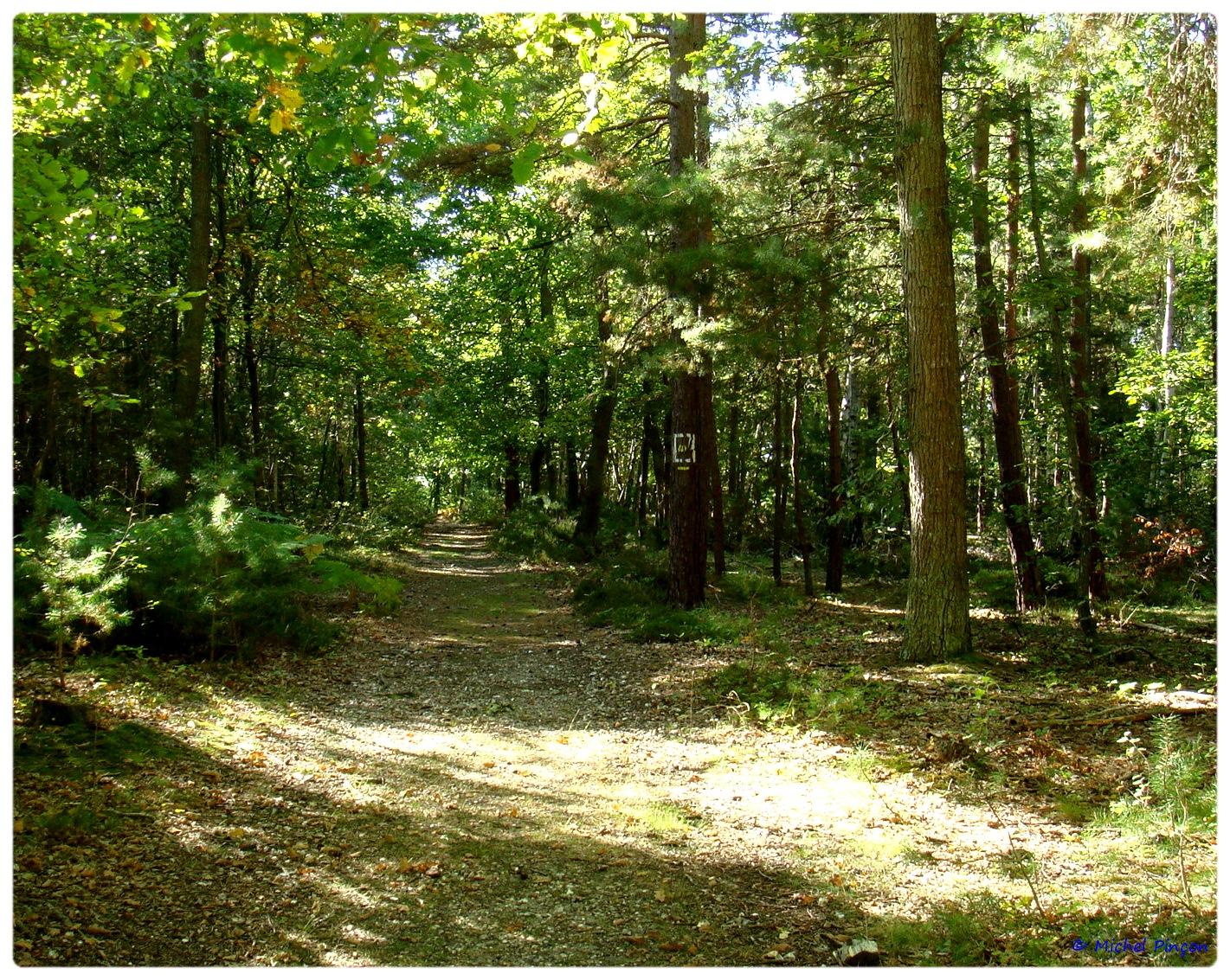 [fil ouvert] la forêt dans tous ses états - Page 6 406099DSC011125