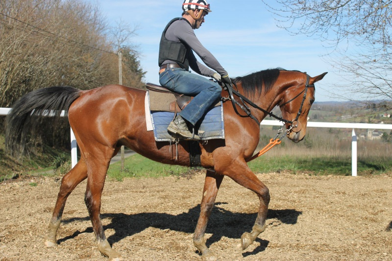 Elicios (Chef de Clan et Olbia x April Night ) 406867EHCHEF3ans0320172