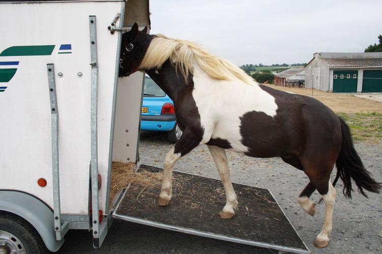 LOONY -  ONC poney né en 2001 - Adopté en juin 2011 par Carole 412846Looetsanouvellefamille4