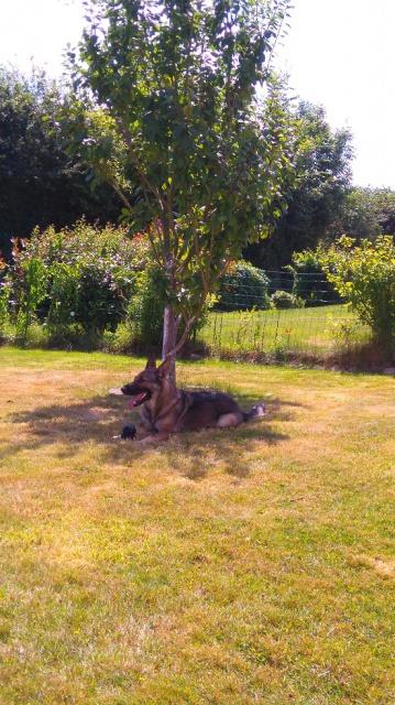 Photos de vous et vos chiens en pleine activité (course, vtt,ring, ..) 414034Heidielombre