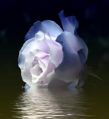 Une rose à offrir n°2 - Page 17 417928ARoseFromMyHeart1jpg
