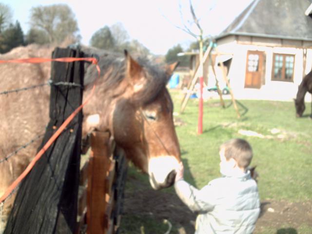 (dpt 27) VITTEAUX Trait Ardennais, né en 2009, rouan, hongre, NON MONTABLE (en famille d'accueil chez BENOIT) 418353PICT0134