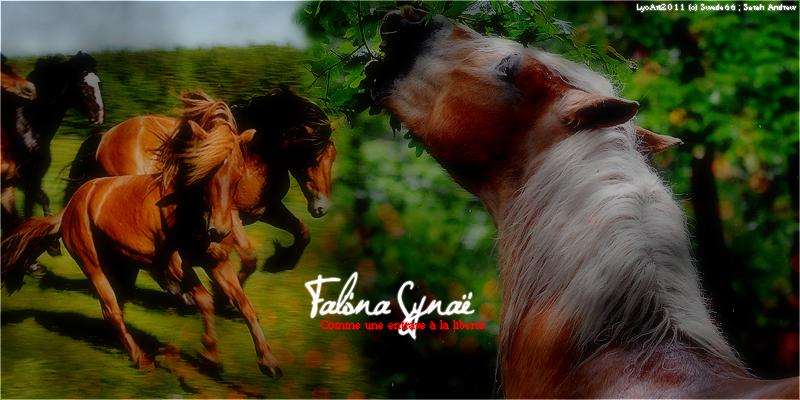 Crédits ; Falona Synae © 424573Fsheadert