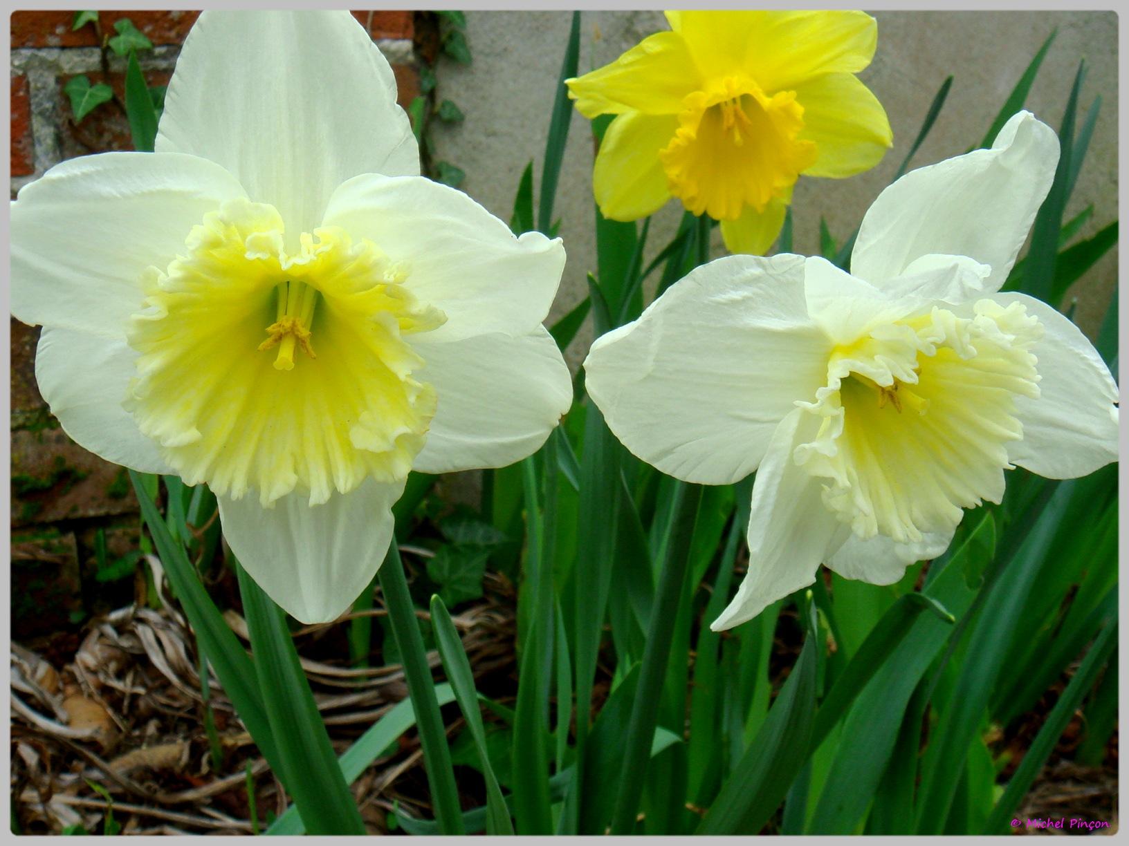 [Fil Ouvert] Fleurs 425141DSC012480