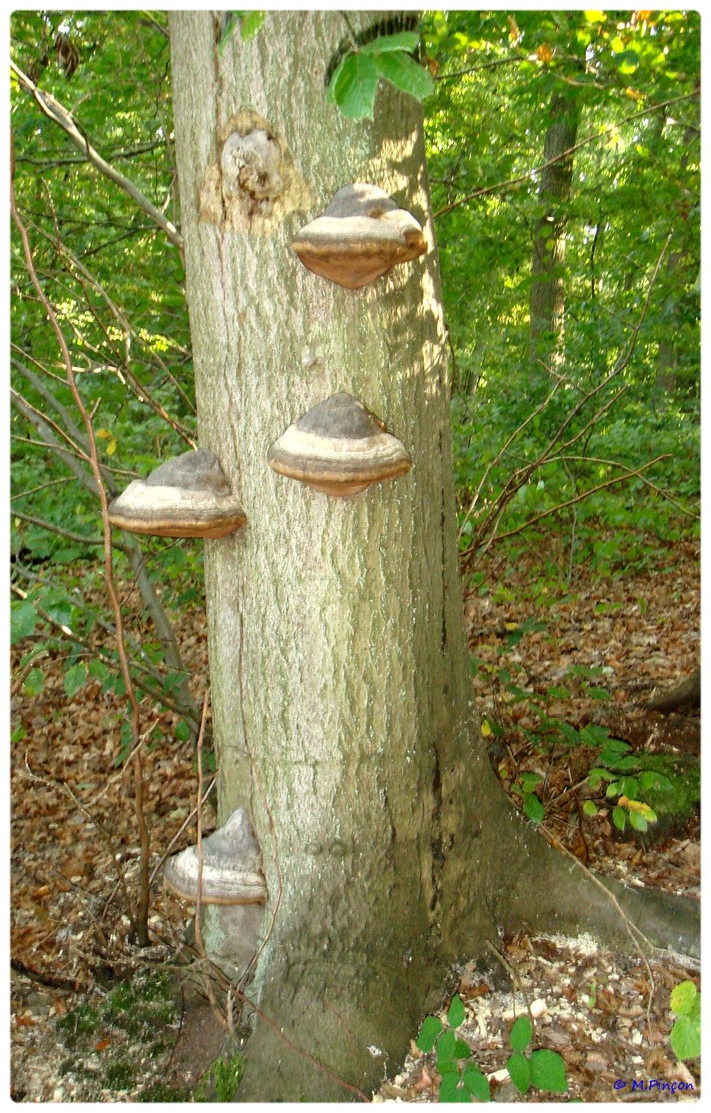 [fil ouvert] les champignons 427272DSC011141