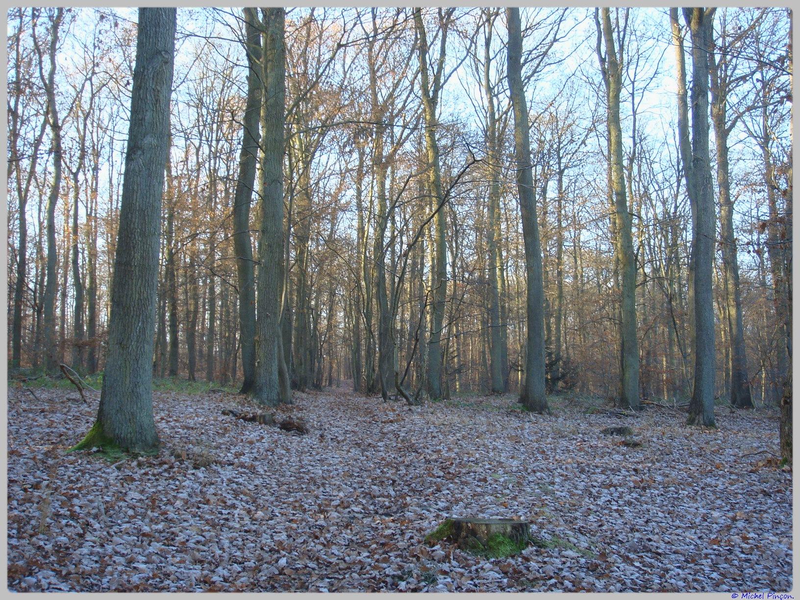 [fil ouvert] la forêt dans tous ses états - Page 11 433288DSC011636