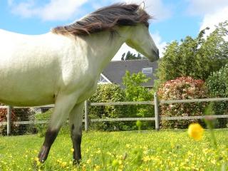 Présentez-nous vos chevaux ! <3 434978DSCN8423