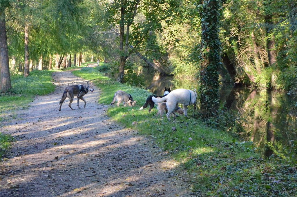 border - L'éducation de ma chienne, Jeune border collie - Page 2 436655CSC2300
