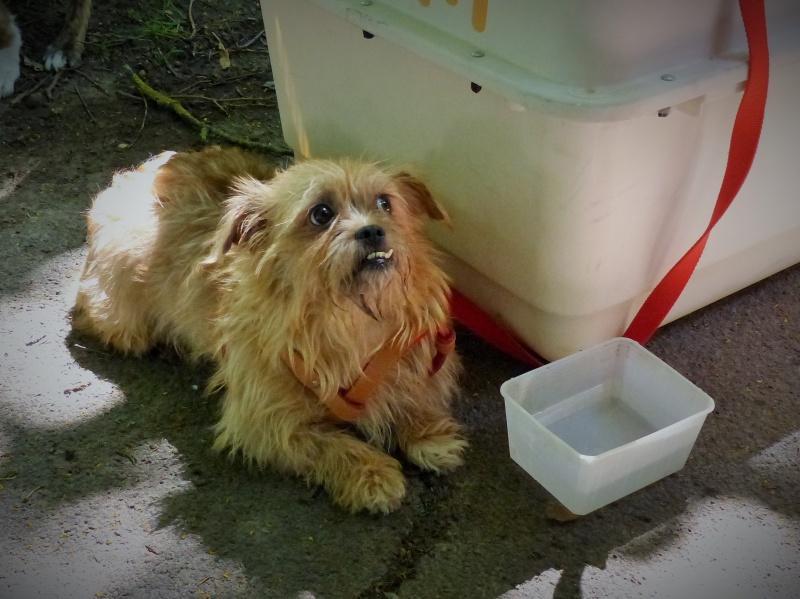 Yvona, née en 2011, petit modèle, chienne super sage 445606P10909332