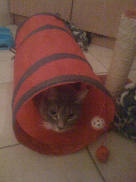 JOEY adopté 06/12/2011 456363IMG1265
