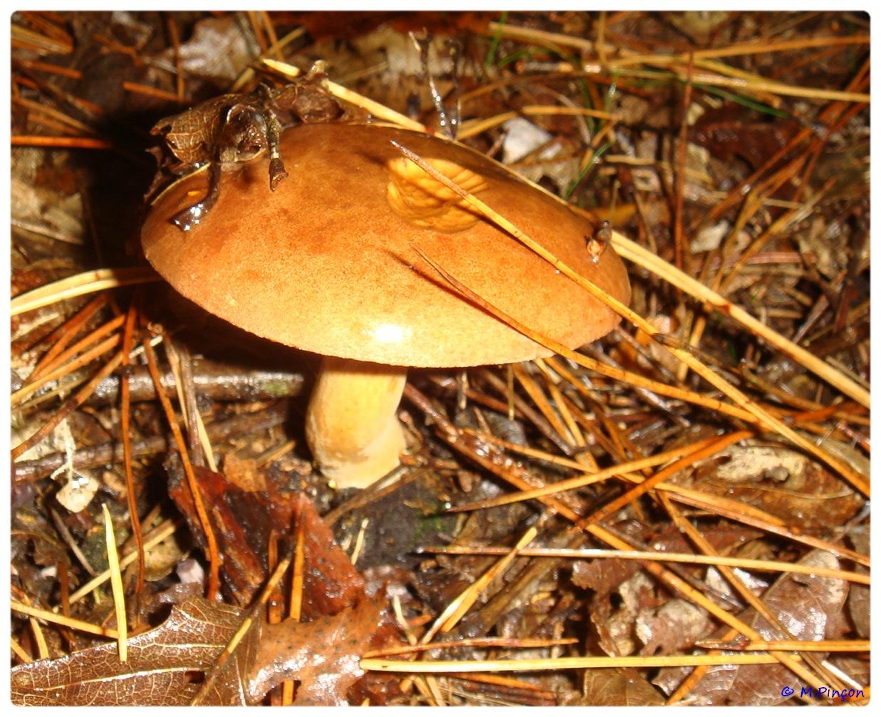 [fil ouvert] les champignons 458569DSC011195