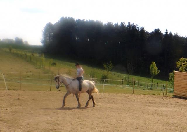 Estimation de nos chevaux ! - Page 4 459237485
