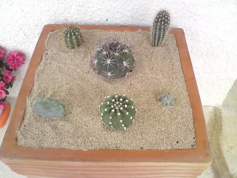 Jardin Mexicain - Page 2 459846DSC04196