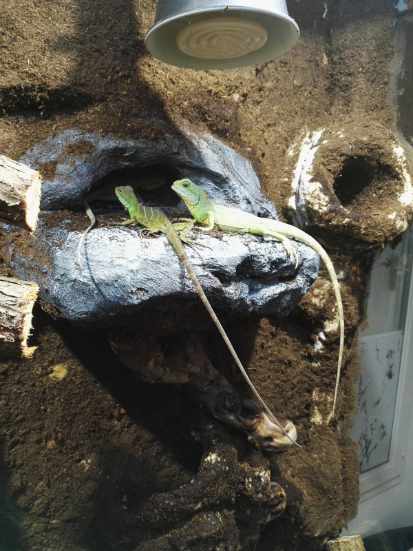 terrarium tropical dragons d'eau 4622526824