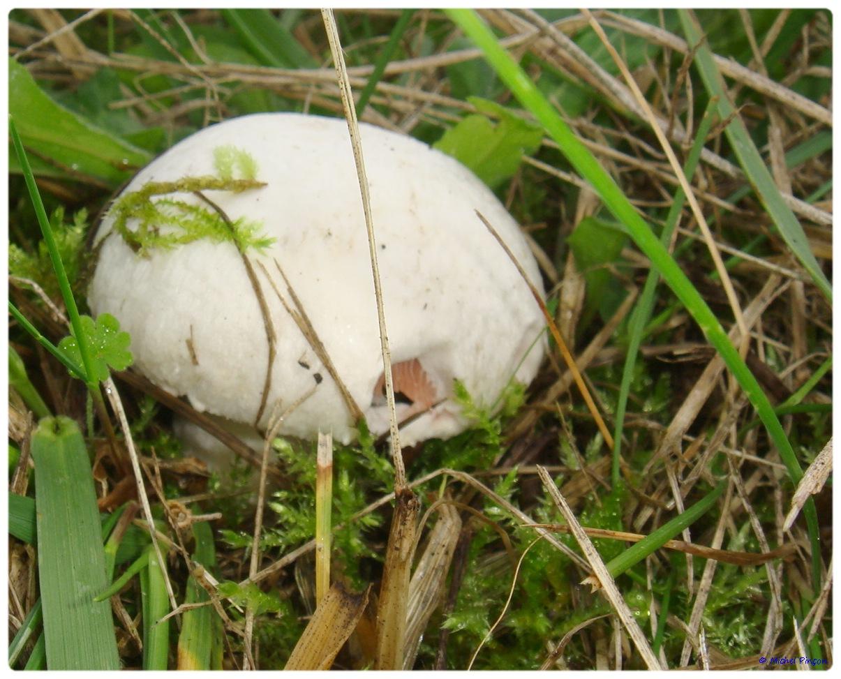 [fil ouvert] les champignons - Page 3 463441DSC011474