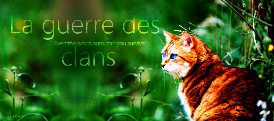 Une forêt de guerre, une forêt de chats