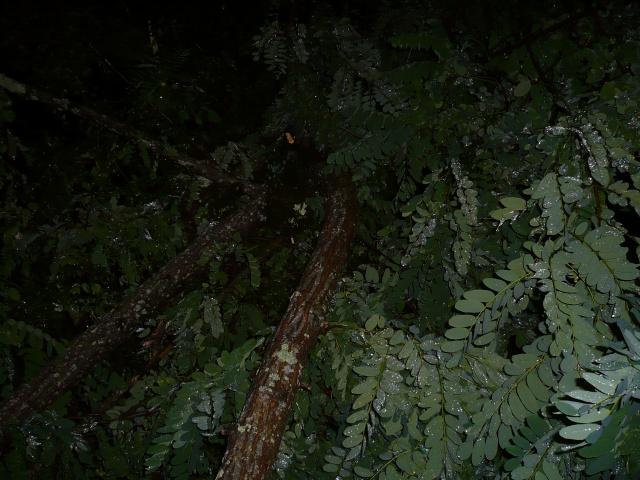 Orages monstres sur le Bordelais dans la nuit du 25 au 26/07 et du 26 au 27/07 466985P1200597