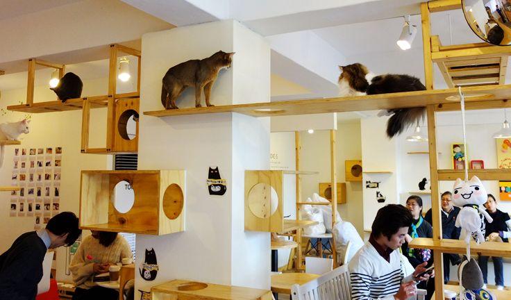 [Société] Neko-cafés, les bars à chats 470664chattt