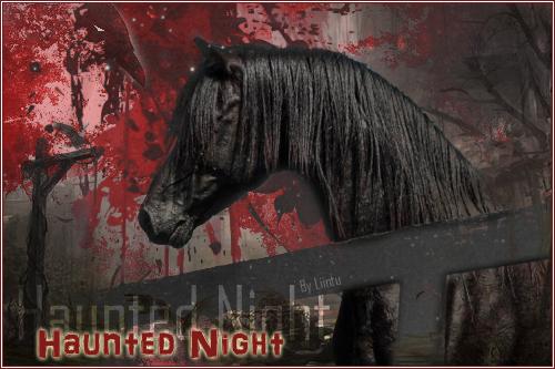 HAUNTED NIGHT - ♂ - SAUVAGE 470695HauntedNight