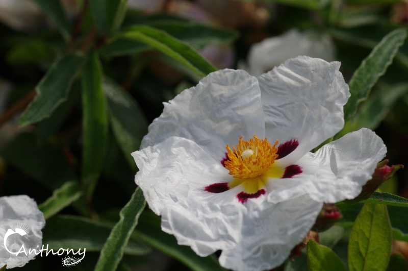 Fleur de graminée 474381IMGP5078