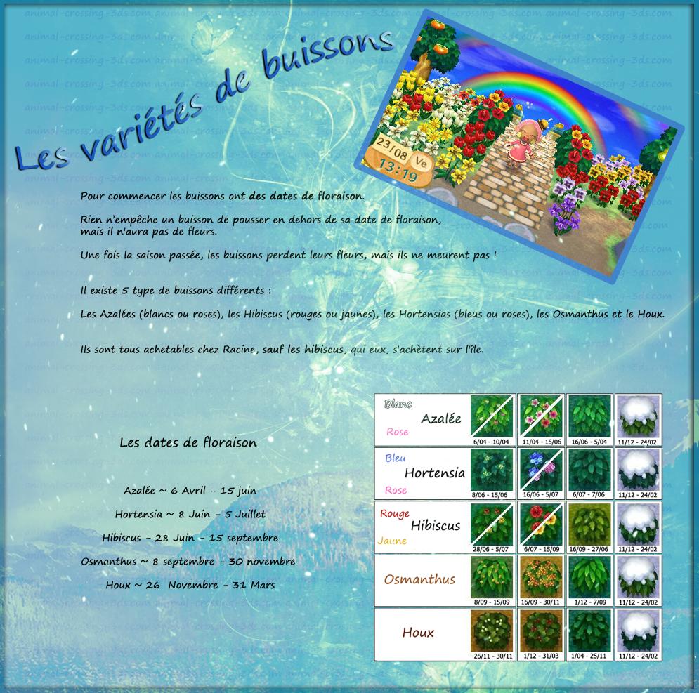 Les variétés de buissons. 477672Buissons