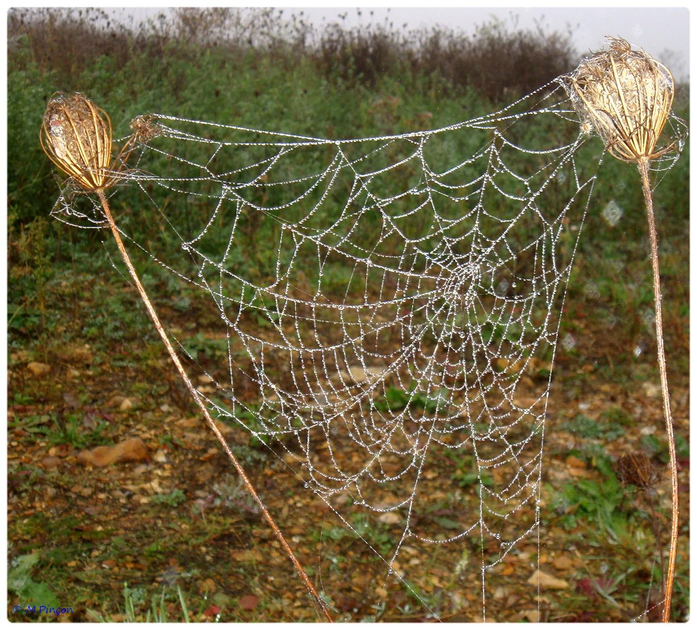 (FIL OUVERT à tous) vous aimez les araignées? - Page 5 478262DSC011260