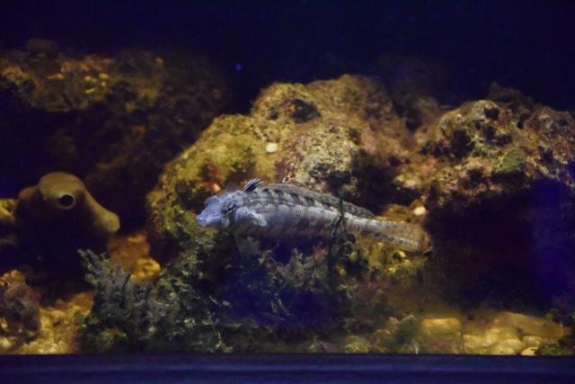 Le nouveau bac du Poissonpané : aquaterrarium de 900L / Nouvelle Calédonie - Page 2 479442DSC0004