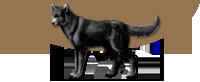 Loup-garou solitaire
