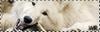 Wolf Temporal's Origins 482494Petitbouton