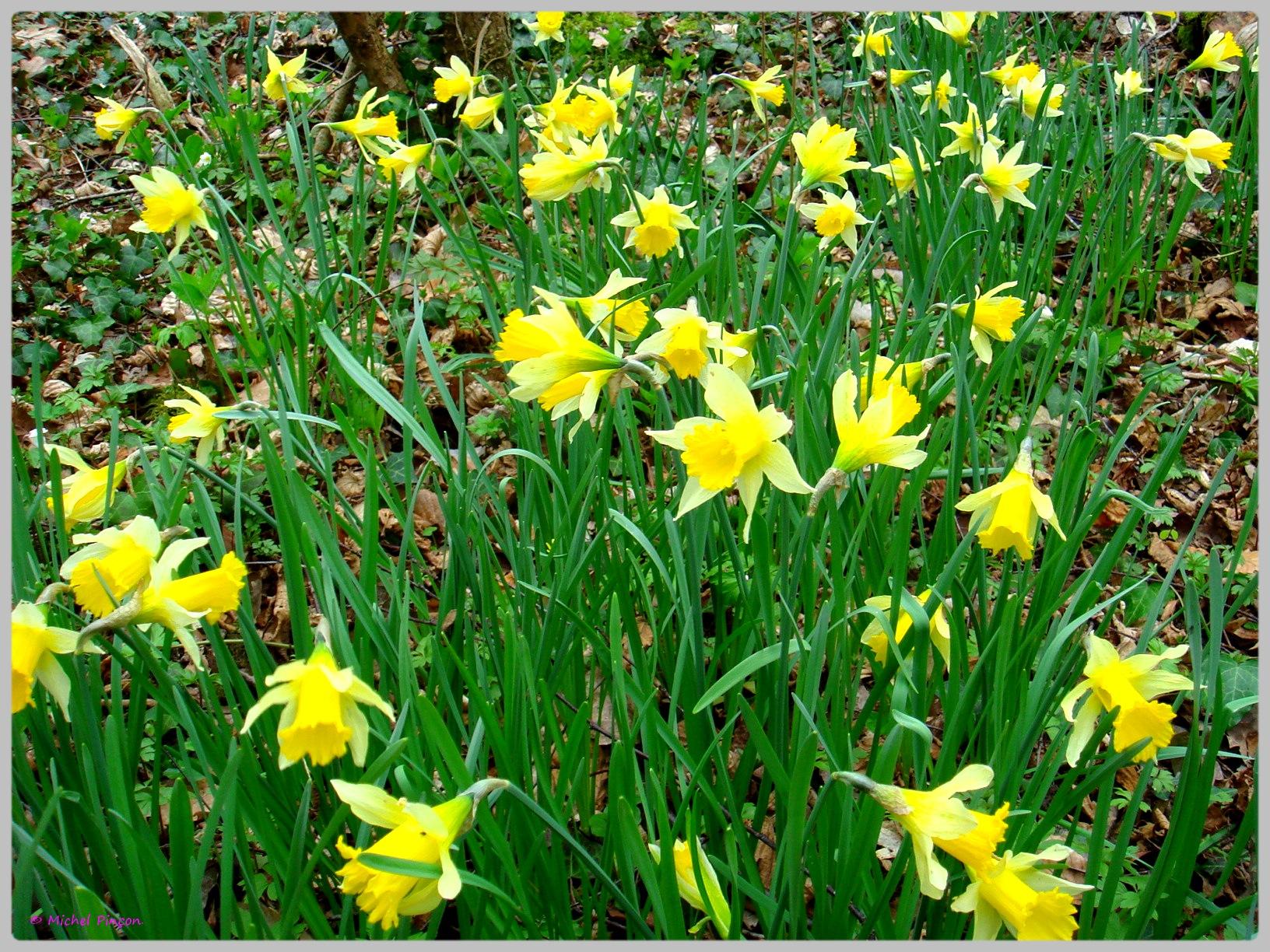 [Fil Ouvert] Fleurs 501898DSC012463
