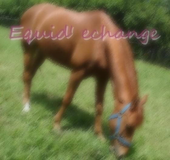 Equid' echange