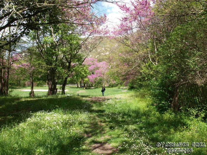 """La Vallée de St Pons """" La Vallée Rose """" à Gemenos Bouches du Rhône ♥♥♥ 50452513"""