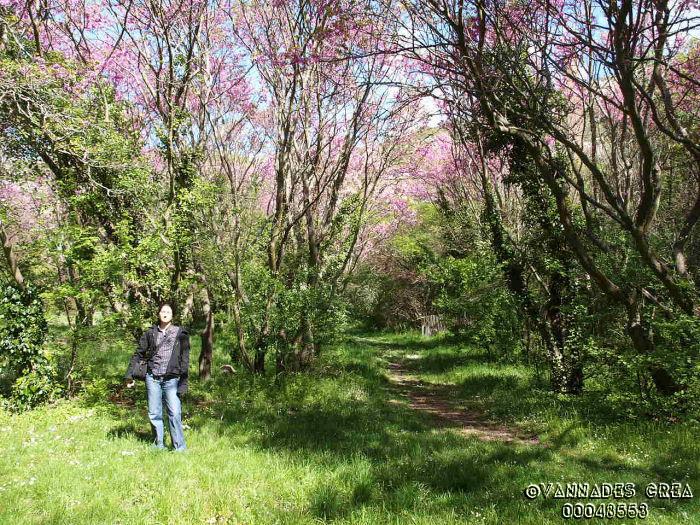 """La Vallée de St Pons """" La Vallée Rose """" à Gemenos Bouches du Rhône ♥♥♥ 51133044"""
