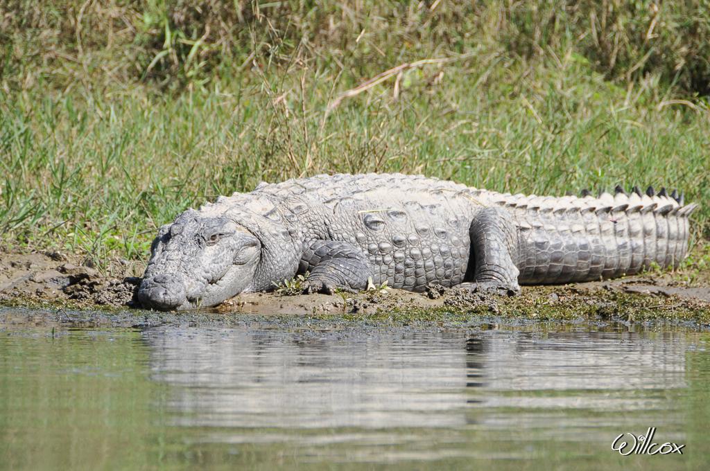[Fil ouvert à tous] Reptiles, serpents, tortues, amphibiens, ... 517045YD10069