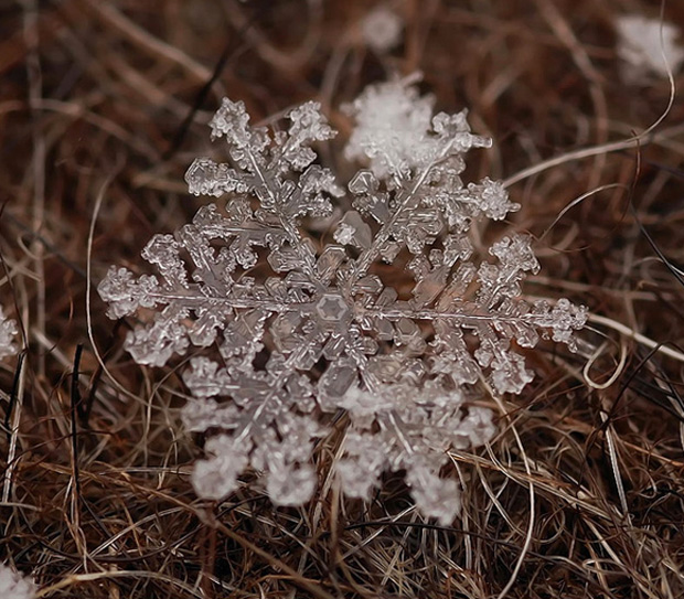 la légende des flocons de neige 529304AndrewOsokinmacrophotographiesfloconsdeneige