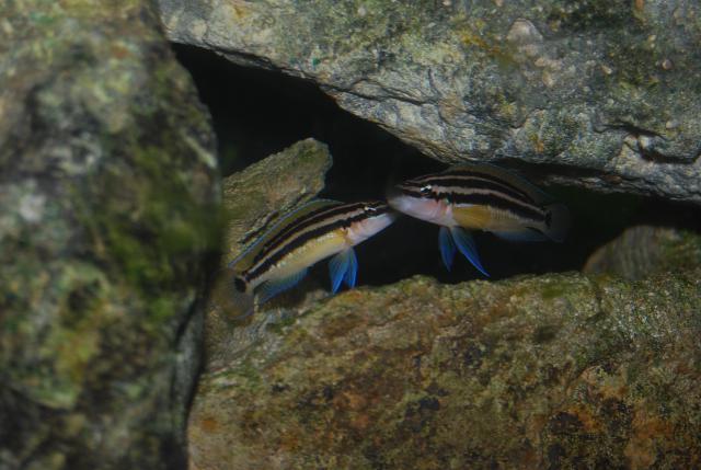 [ORCHIES 5 juin 2011] Tous poissons : j'amène, je recherche... - Page 3 530924DSC0095