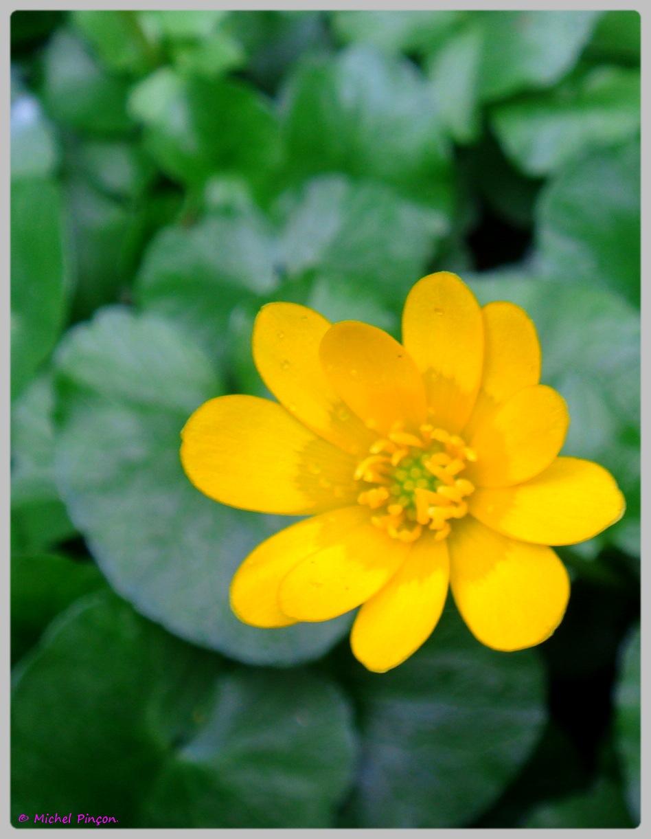 [Fil Ouvert] Fleurs 531443DSC012464